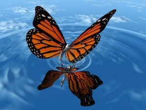 15324669-the-beautiful-butterfly-with-wings